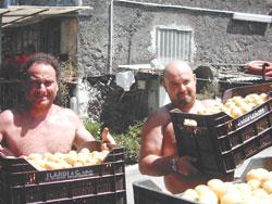 Ritorna in campo la frutta nelle scuole