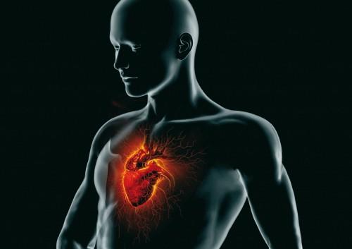 Progetto VIP, work in progress 2012: prevenzione delle malattie cardiovascolari