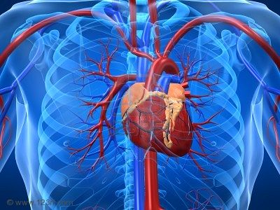Sos dalla Campania, la prevenzione cardiovascolare inizi dall'infanzia