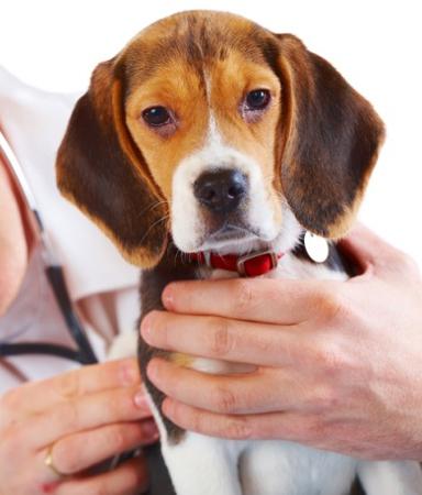 Domenica corso di aggiornamento per veterinari a Salerno