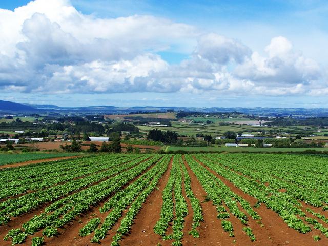 Salerno, Morgana e Burocrazia minacciano l'Agricoltura