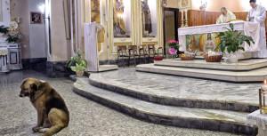 cane_ciccio_chiesa_brindisi_645