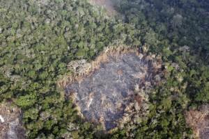 La tragedia della deforestazione