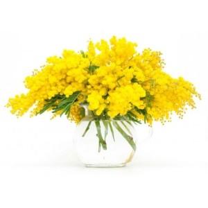 Pagina_8_marzo_con_bazzocchi_piante_e_fiori