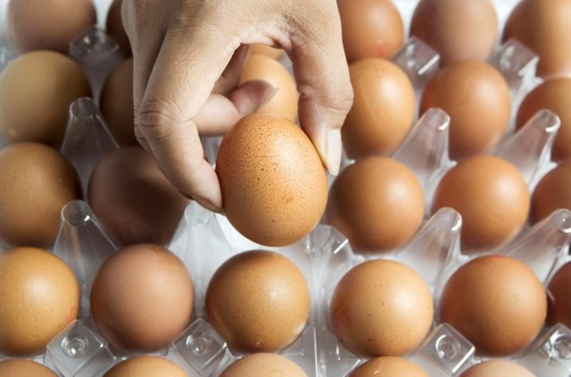 Emergenza uova contaminate